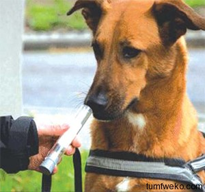 Sniffer Dogs Detect Lung Cancer