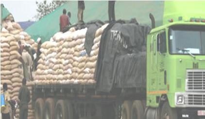 K100m Maize Scam Unearthed In Kalomo